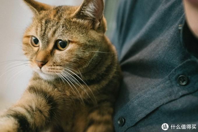 忘了给他拍全身照,只找到某天出去撸猫,为了拍猫带到了他的衬衫,就当细节图看看吧~(重点是可以看猫)