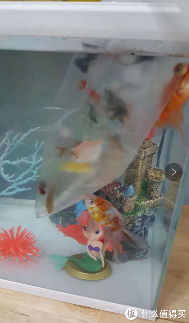 被女儿带出的少女心--微景观美人鱼主题水族箱DIY分享