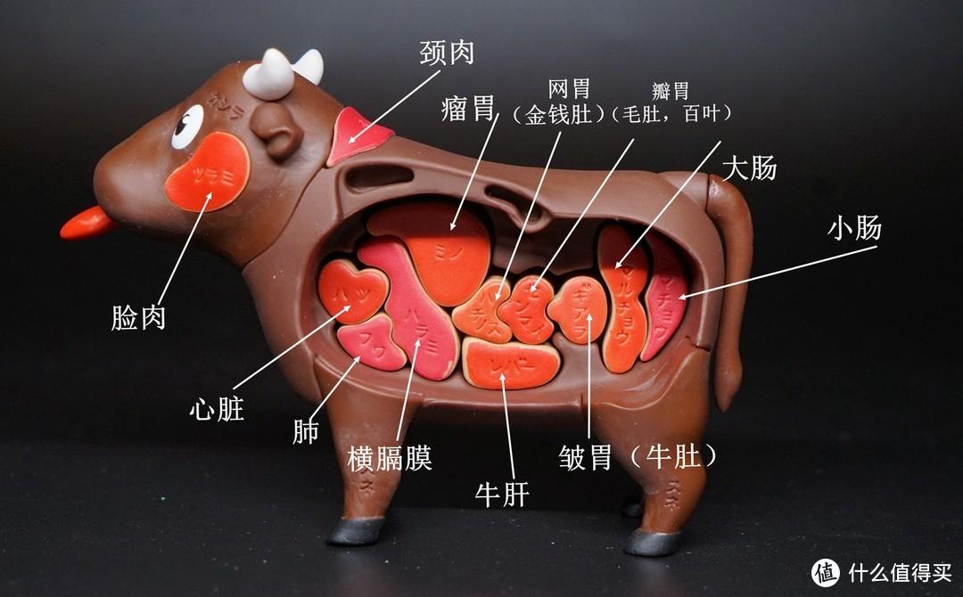 MEGAHOUSE 3D拼图玩具 和牛&金枪鱼篇