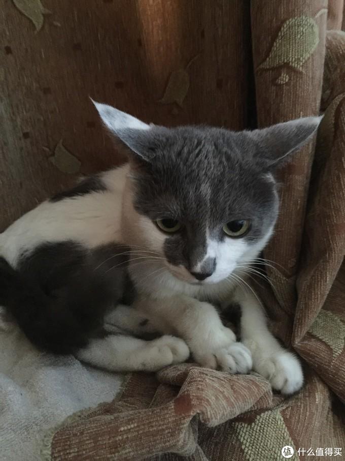 虽然不懂怎么养猫,但是我家主子高寿啊~!