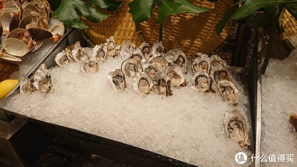 来的早牡蛎品质不错