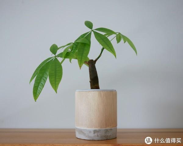 我家植物那些事儿