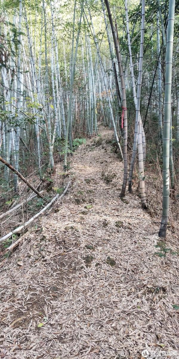 穿越宁波无人区,记五连坑环线徒步登山