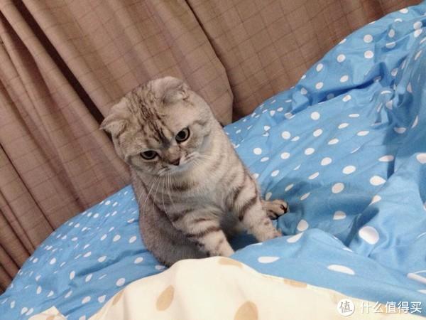 """撸猫的乐趣:记录我哥家可爱的""""小胖球"""""""