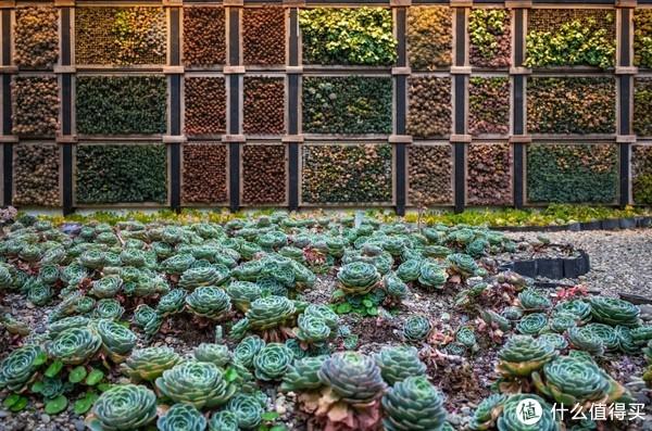 这大概是大理最少女心的地方!苍山洱海的秘密花园—木石居