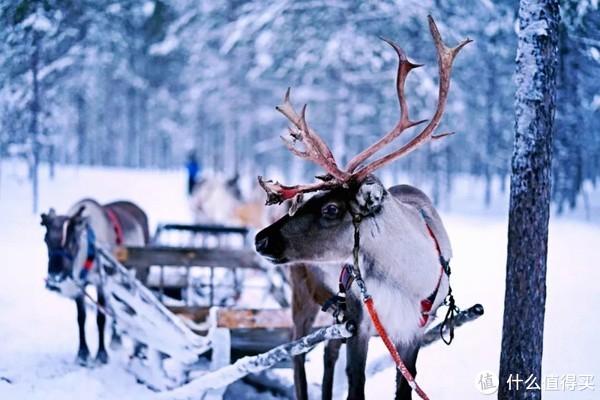 躺在床上看极光,邂逅圣诞老人故乡,十二月必去