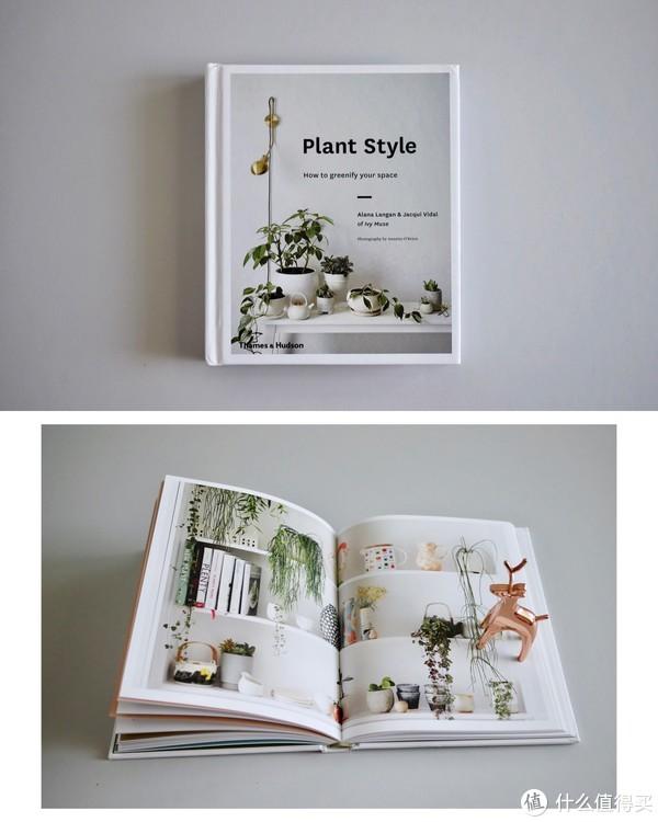 绿植空间植物摆放