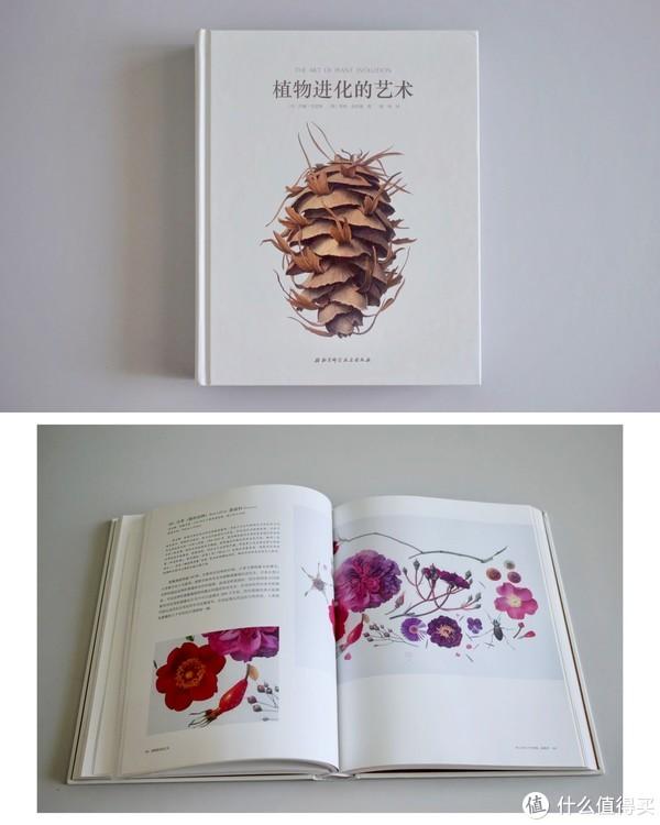以手绘植物的形式科学地讲解植物进化史