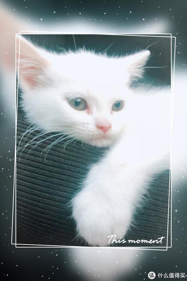 只要有人多一点爱,曾经的流浪猫华丽转身为高冷主子