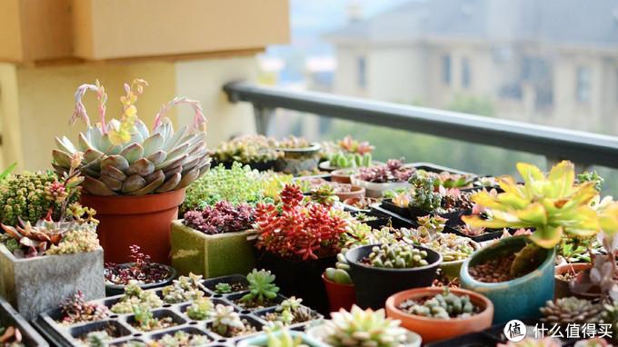 花盆尺寸可以多从网上分享的定植图里找灵感