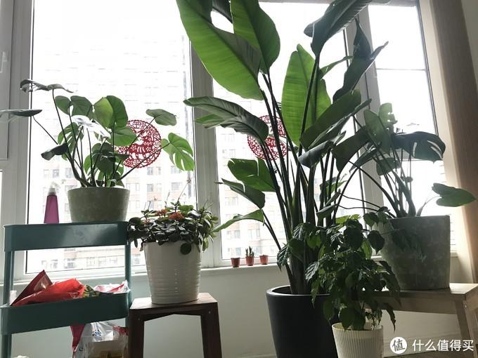仙灵禁欲的极简风水培植物 能活的持久吗?花+水雾森林一个月生长情况