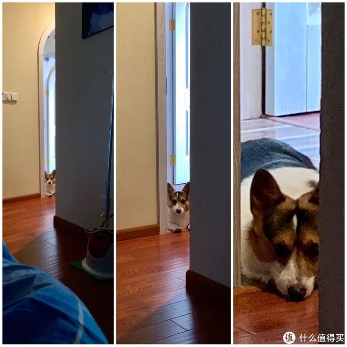 ▲说托米乖巧听话就在这里,叫它不准进卧室它绝对不会进,而是在门口默默地注视你。