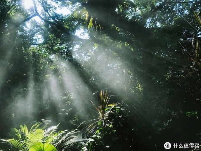 厦门不只有鼓浪屿,热带雨林和比人高的仙人掌你不想看看吗?交通便利,本地人也会去~