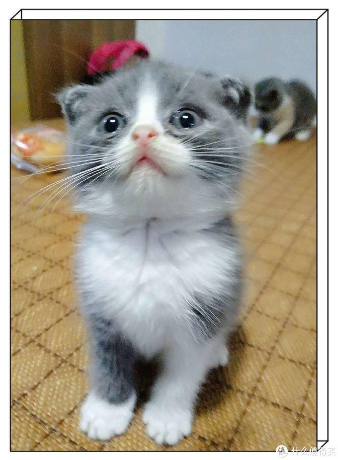 家里没矿,但我有猫……而且…是三只—做一个幸福的铲屎官