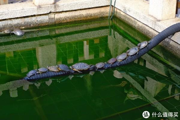 开元寺的放生池,有一种小学生体育课向左转后的感觉