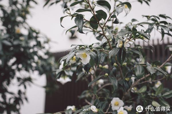 出发时门口的花花草草