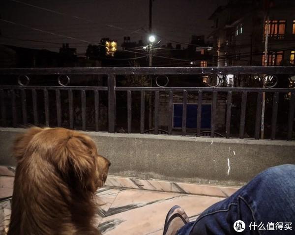 晚上,两头单身狗