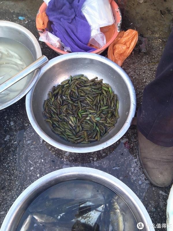 这个应该是蜻蜓幼虫来的,广东没有的吃,照样的买下菜馆加工