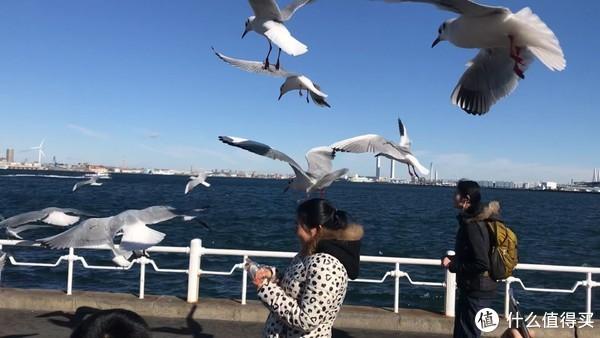 在码头一定要准备点零食喂一喂海鸥,可以零距离接触,拍照效果非常好。