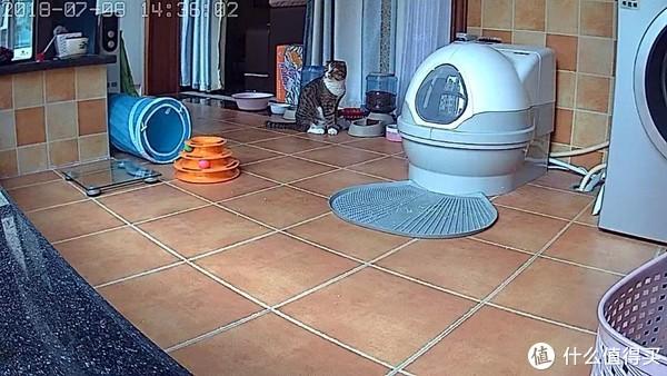 CatGenie猫洁易使用体验及海淘过程