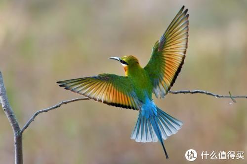 有实力不低调—361° M1°RO SPIRE 3栗喉蜂虎鸟入手体验