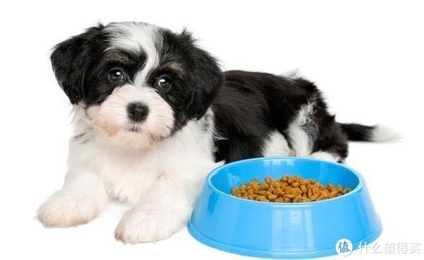 狗狗食欲不振怎么办?