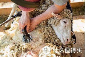 电动剪羊毛