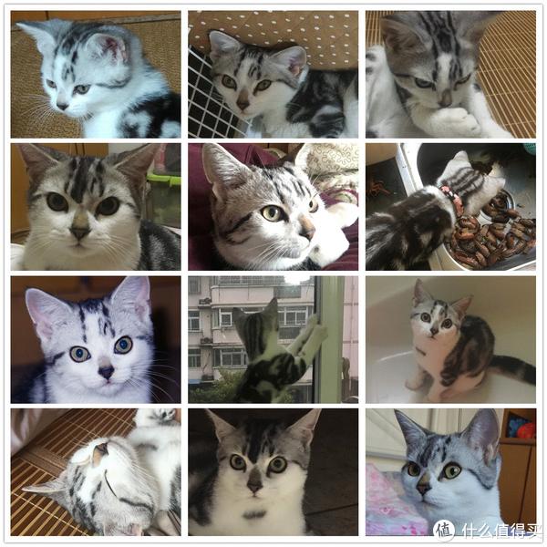 家有幼猫初长成,健壮猫咪培育记