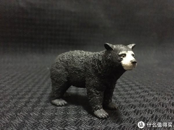 黑熊长的特别萌,很可爱