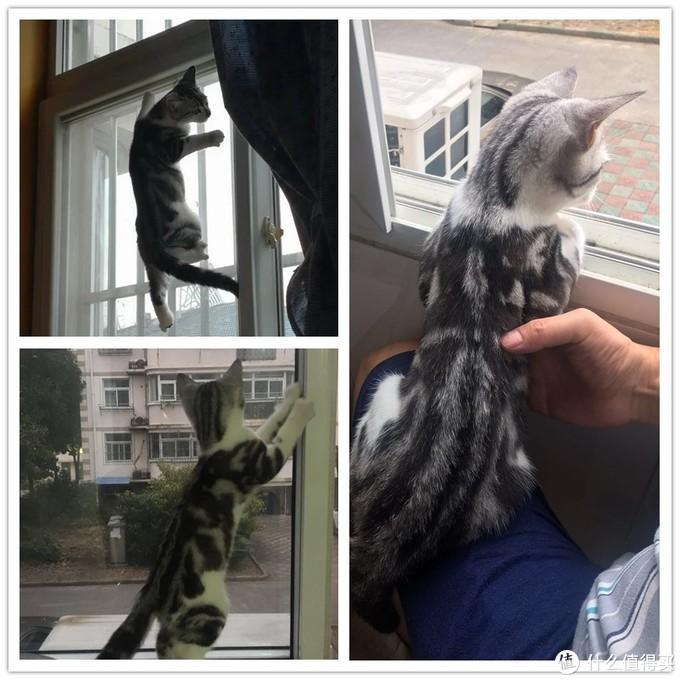 猫咪出行必备之背包
