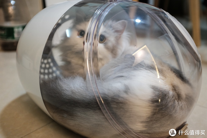 猫卜力胶囊猫包体验