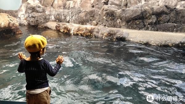 一个等待海豚跃出水面的小女孩!我和媳妇叫她小黄帽,凑巧那天媳妇背的是黄书包。