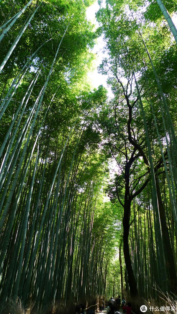 去往天龙寺的竹林