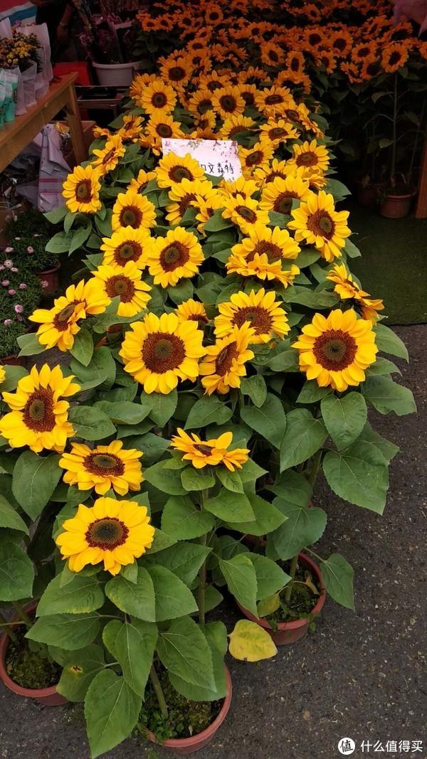 文森特,不是到是不是在纪念梵高的版本呢?向日葵已经不再外借展出了。