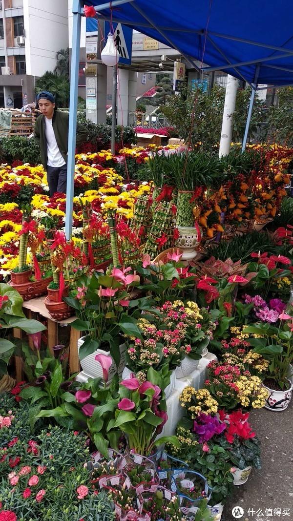 各种年花,石竹、马蹄莲、仙客来、长寿、红掌、五代同堂等等我是只能用力把老婆拖走,不然买买买的话,根本是拿不了那么多的走,菊花混色种,好漂亮