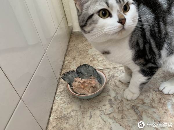 猫咪年夜饭,自制的更健康