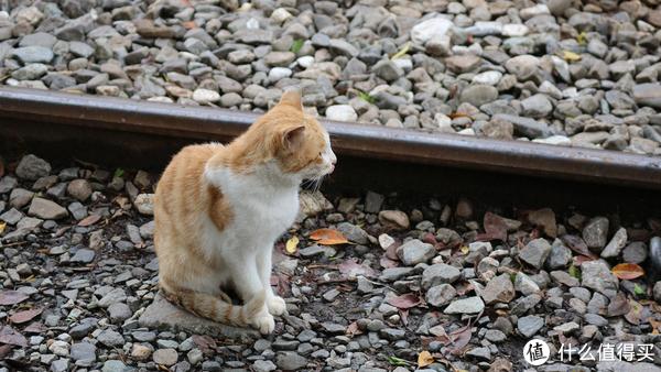 火车到旁的小猫