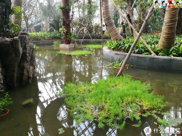 左边景观水池内各种水生植物盘桓其中,