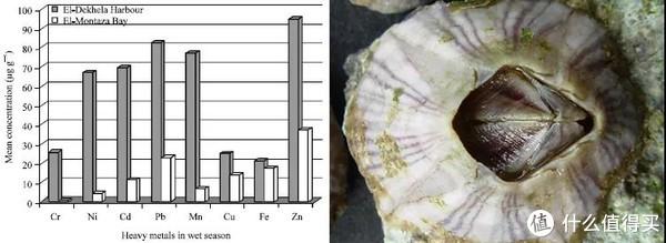 一项研究发现,在检测的几种重金属中,纹藤壶(A. amphitrite)的软组织对锌的富集能力最强。图片:S. Al-Farrajet al./Research Journal of Environmental Sciences(2011);Auguste Le Roux / wikimedia