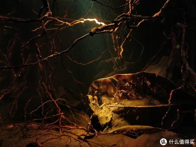 一缸一世界——懒人鱼缸可以是什么样子