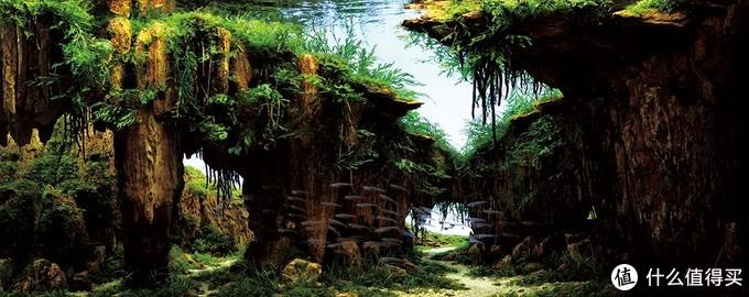 ADA世界水草造景大赛2016 第一名 神窟