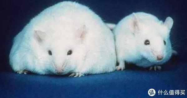 脂肪不全是坏的,多运动能减肥,这种脂肪有不小的功劳