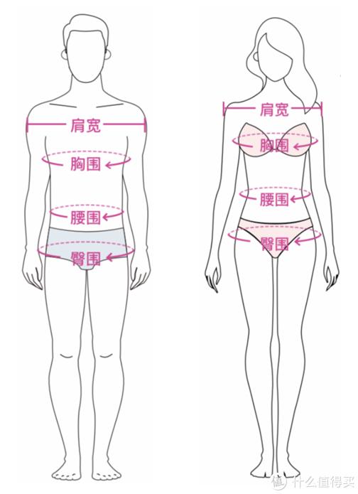 男女体型尺码量测