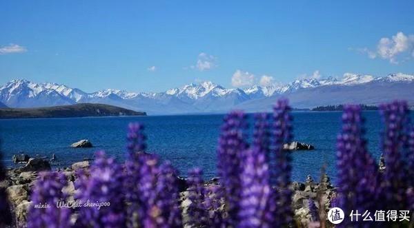 新西兰,给你一场惊喜之旅