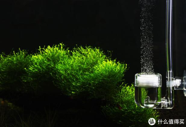 草缸养成记,第一次养草的经历分享