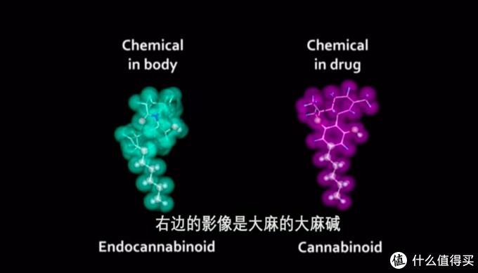 """右边是大麻中的大麻碱,左边是人体自行制造的""""内生性大麻"""""""
