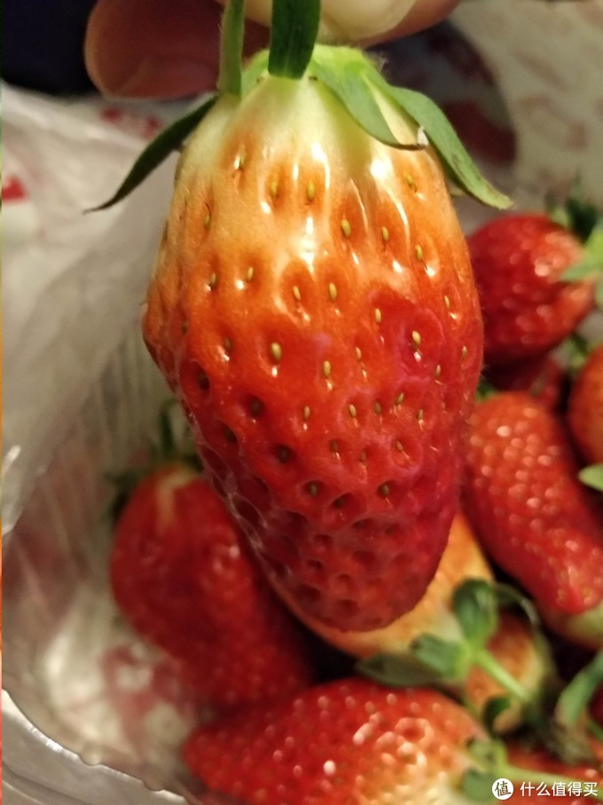 吃草莓也是一个学问,不追网红,跟着历史控乡民看品种吃草莓