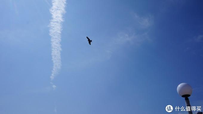 有五六只老鹰在海洋公园上空盘旋