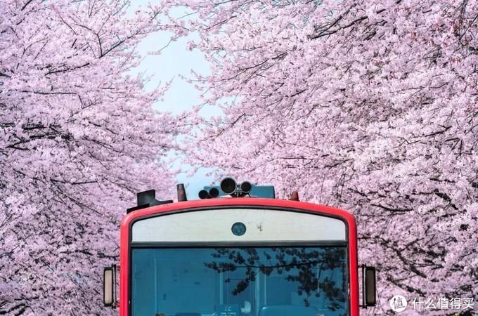 没有提前准备也能捡漏,想要高性价比去日本赏樱看这里