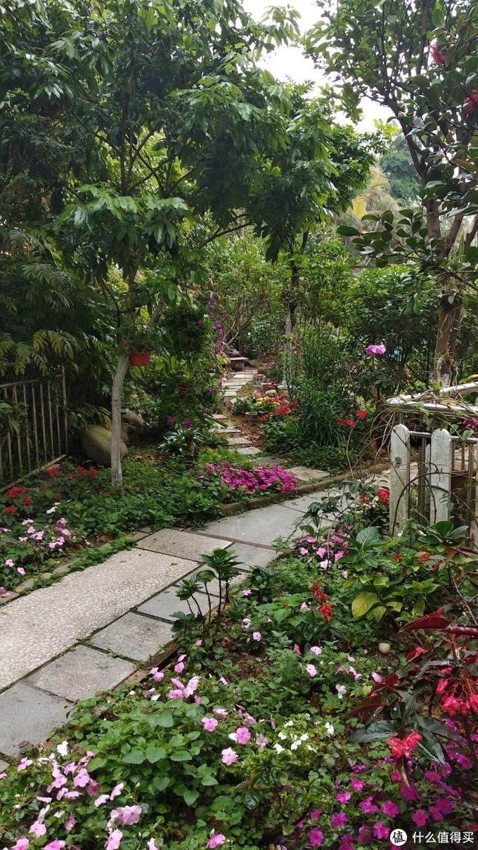 从花园往家走,101到102的路,荔枝 柚子 黄皮 杨桃 木瓜都有,每年都有吃的